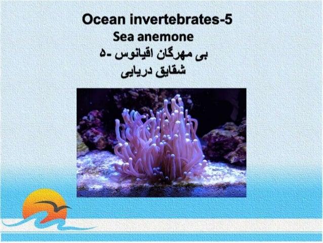Ocean invertebrates- 5