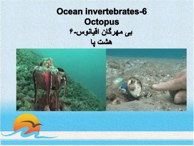 Ocean invertebrates- 6