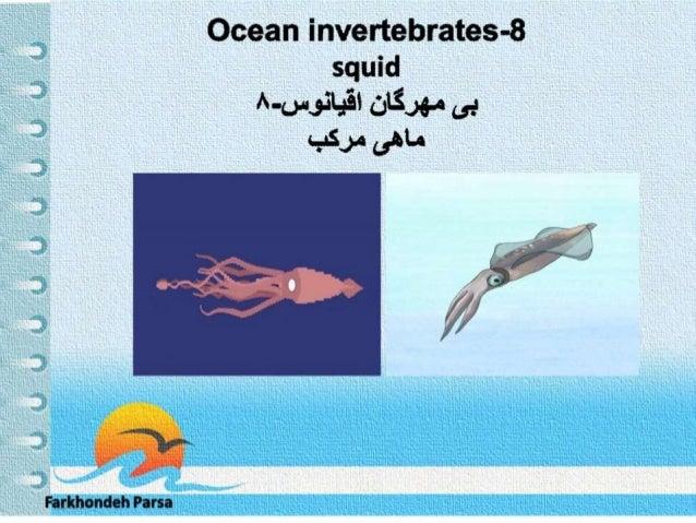 Ocean invertebrates -8