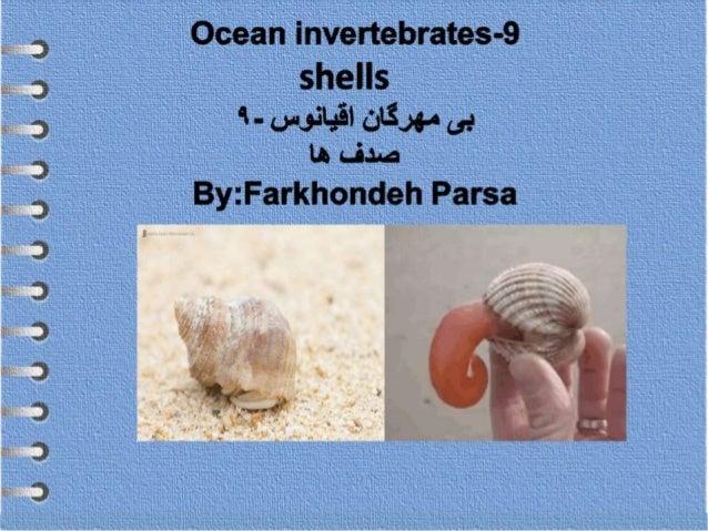 Ocean invertebrates- 9