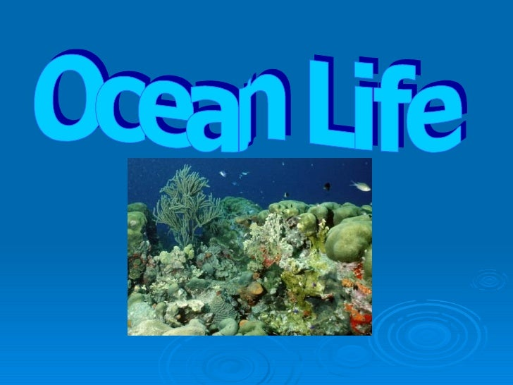 Ocean Habitats •   Ocean animal habitats are divided into layers     or zones according to the amount of sunlight     each...