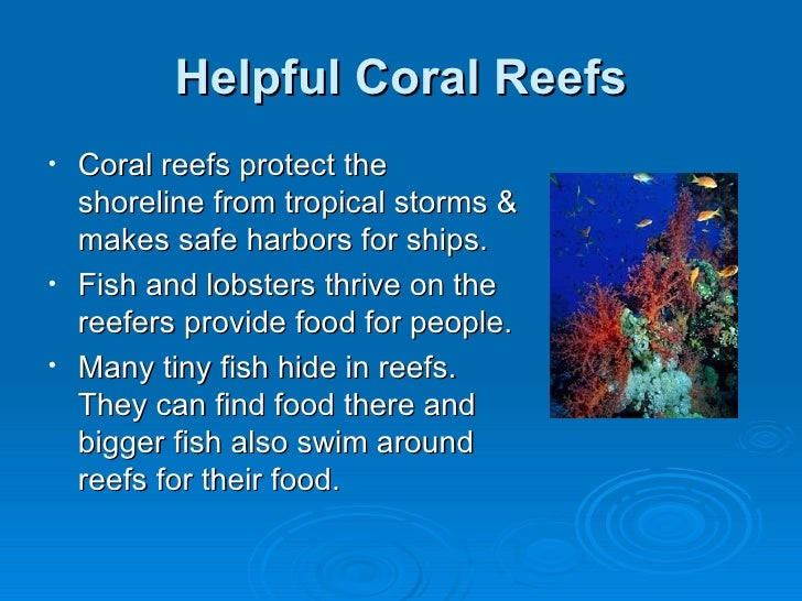 are coral reefs in danger essay The tools you need to write a quality essay or term paper  therefore putting them in great danger  essays related to effects of global warming on coral reefs 1.