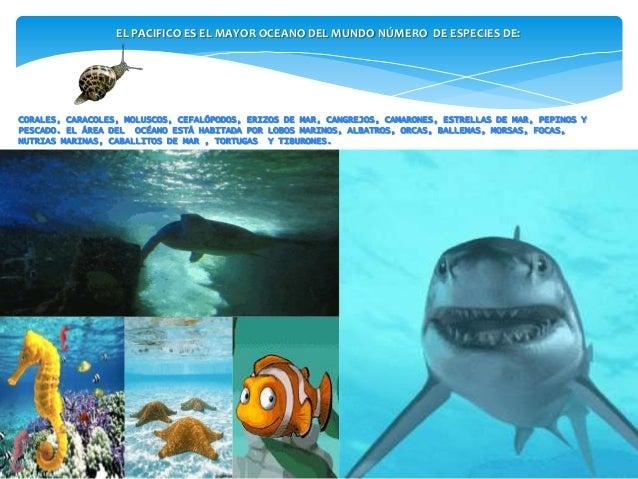 Why Uai O Oceano Pacífico