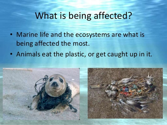 Plastic bags is bad for the environment - Ocean Pollution