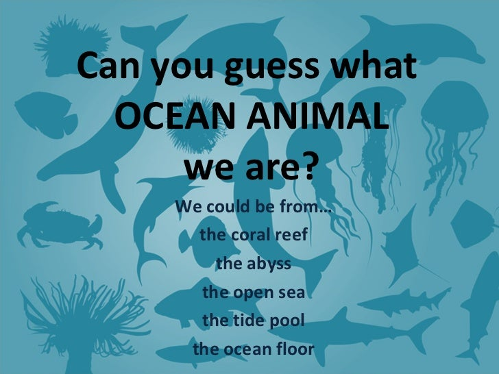Can you guess what  OCEAN ANIMAL we are? We could be from… the coral reef the abyss the open sea the tide pool the ocean f...