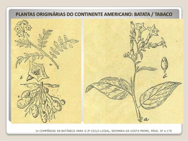 PLANTAS ORIGINÁRIAS DO CONTINENTE AMERICANO: BATATA / TABACO In COMPÊNDIO DE BOTÂNICA PARA O 2º CICLO LICEAL, SEOMARA DA C...