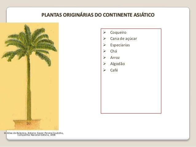 In Atlas de Botanica, Antonio Xavier Pereira Coutinho, Companhia Nacional Editora, 1808 PLANTAS ORIGINÁRIAS DO CONTINENTE ...