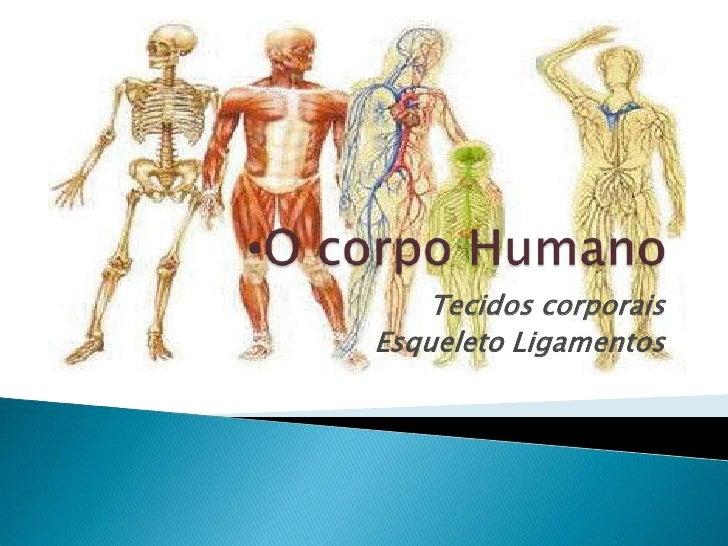 Tecidos corporaisEsqueleto Ligamentos