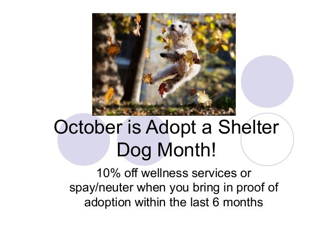 October is Adopt a Shelter Dog Month! 10% off wellness services or spay/neuter when you bring in proof of adoption within ...
