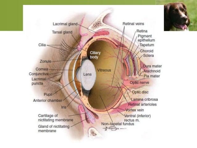 Ocular emergencies 3 ccuart Choice Image