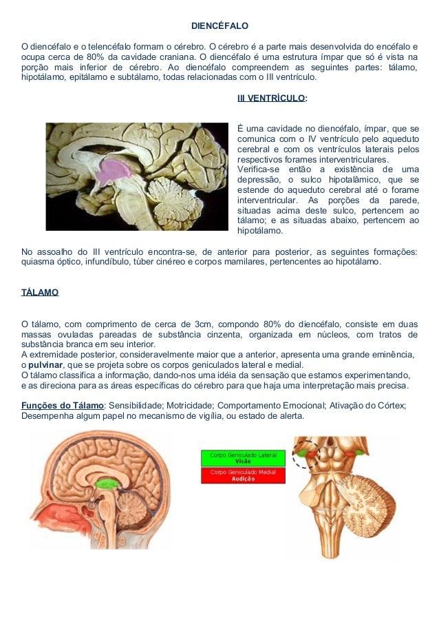 DIENCÉFALO  O diencéfalo e o telencéfalo formam o cérebro. O cérebro é a parte mais desenvolvida do encéfalo e  ocupa cerc...