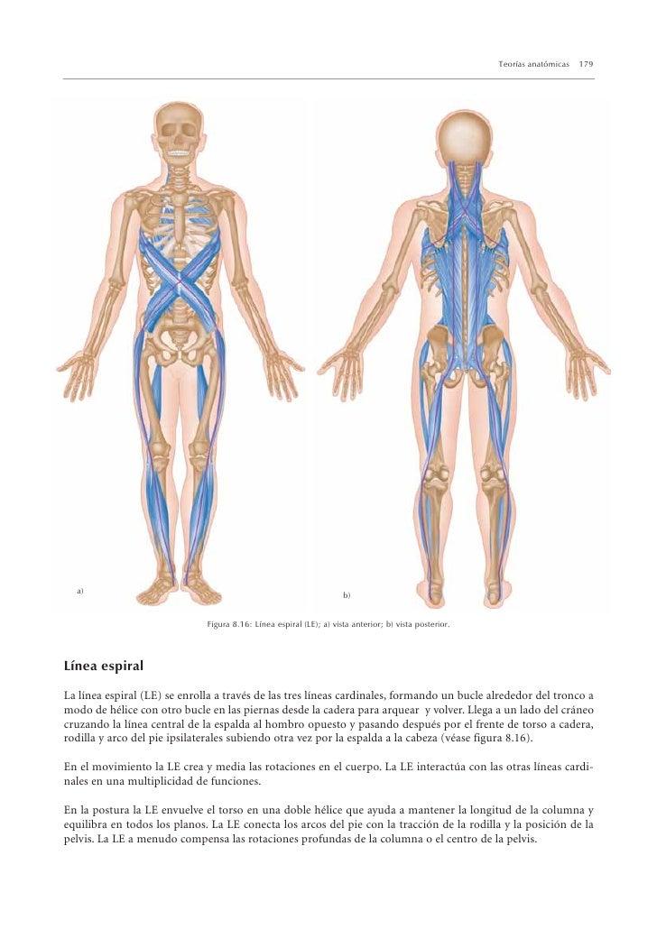 Lujoso Anatomía En Línea Ornamento - Imágenes de Anatomía Humana ...