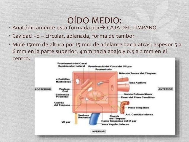 Oído medio anatomía y fisiología