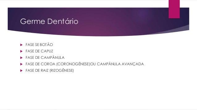 Germe Dentário  FASE SE BOTÃO  FASE DE CAPUZ  FASE DE CAMPÂNULA  FASE DE COROA (CORONOGÊNESE)OU CAMPÂNULA AVANÇADA  F...