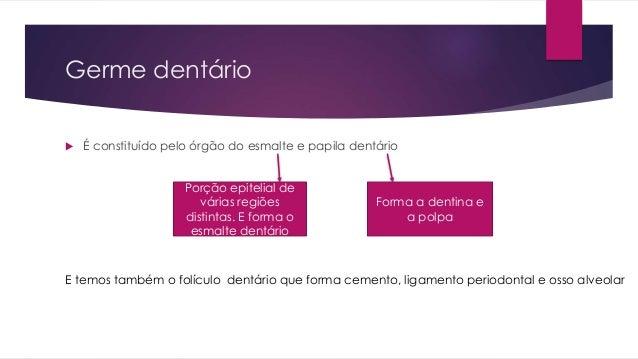 Germe dentário  É constituído pelo órgão do esmalte e papila dentário Porção epitelial de várias regiões distintas. E for...