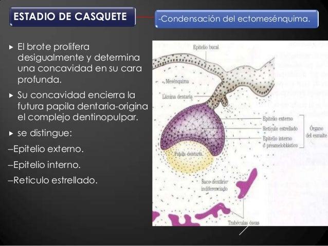 Histologia y embriologia bucodental gomez de ferraris
