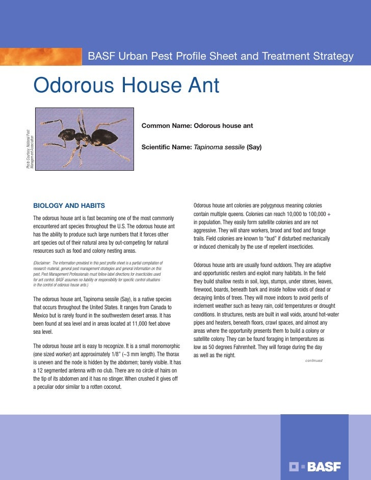 BASF Urban Pest Profile Sheet and Treatment Strategy                             Odorous House Ant                        ...