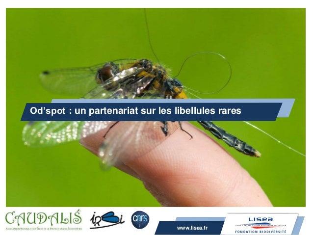 www.lisea.fr Od'spot : un partenariat sur les libellules rares www.lisea.fr