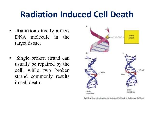 Radioprotector & sensitizer Slide 2