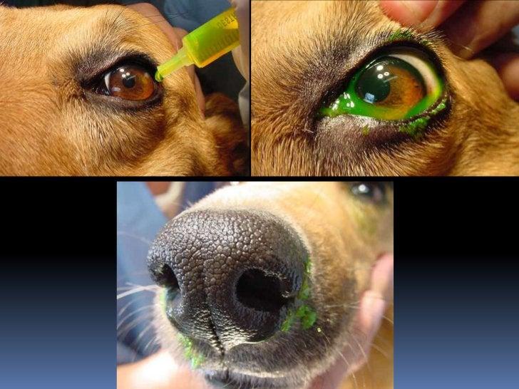 Pupila e Íris Forma Posição Coloração (rubeose) Aderências Massas