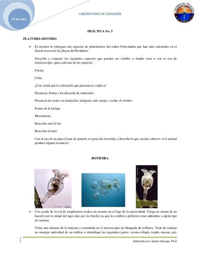 LABORATORIO DE ZOOLOGÍA Elaborado por: Sigmer Quiroga, Ph.D 23 de sept. PRÁCTICA No. 5 PLATYHELMINTHES  El monitor le ent...
