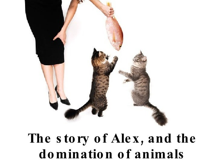 The story of Alex, and the domination of animals