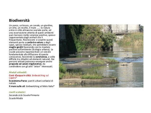 Biodiversità  Un parco, un bosco, un canale, un giardino, un orto, un incolto, il mare …..: la natura entra in città attra...