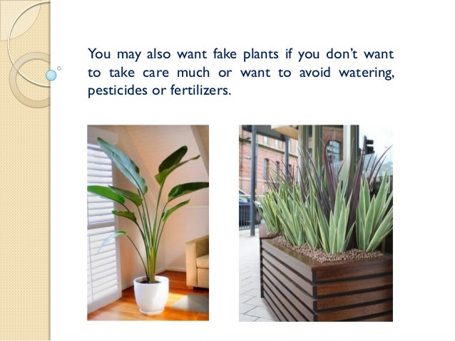 ... 15. You May Also Want Fake Plants ...