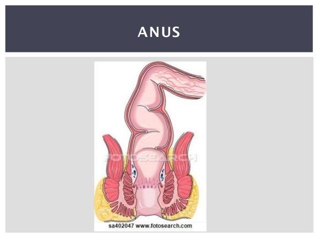 Digestive System Demonstration