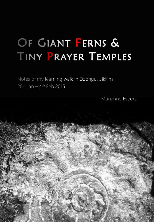 OF GIANT FERNS & TINY PRAYER TEMPLES Notes of my learning walk in Dzongu, Sikkim 28th Jan – 4th Feb 2015 Marianne Esders