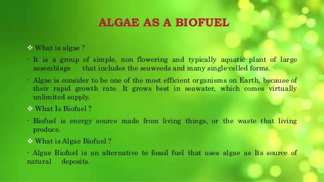 how to create algae fuel