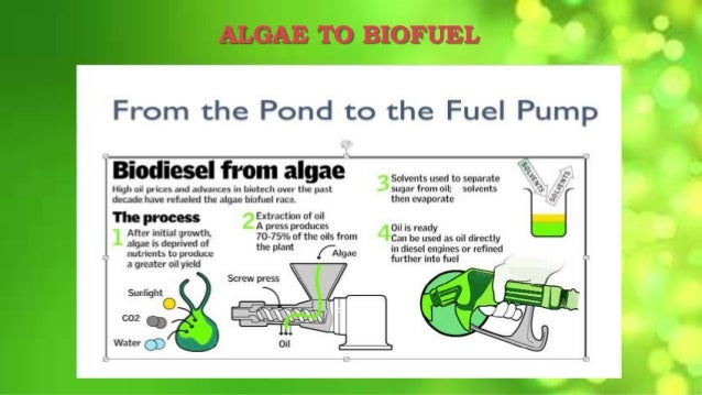 is biofuel an effective substitute for Biofuel is created to be an ideal substitute to extending the use of  there are six reasons why we need biofuels  their value and make them more cost effective.
