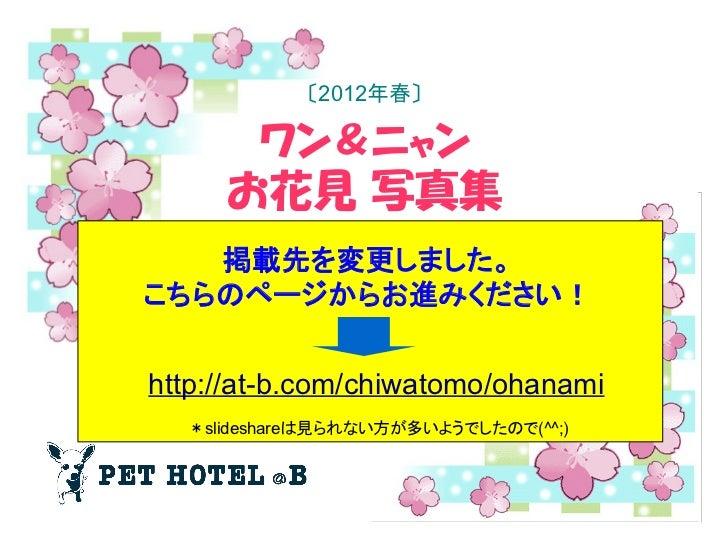 〔2012年春〕        ワン&ニャン     お花見 写真集   掲載先を変更しました。こちらのページからお進みください!http://at-b.com/chiwatomo/ohanami  *slideshareは見られない方が多いよ...