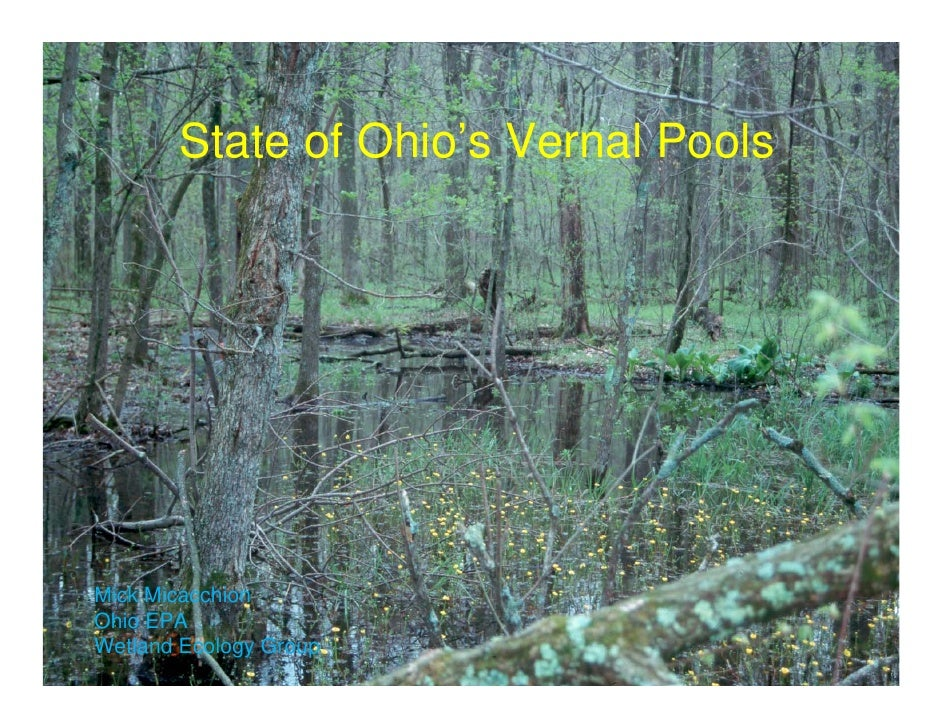 State of Ohio's Vernal Pools     Mick Micacchion Ohio EPA Wetland Ecology Group