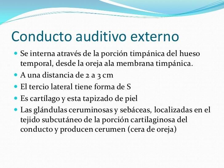 Conducto auditivo externo<br />Se interna através de la porción timpánica del hueso temporal, desde la oreja ala membrana ...
