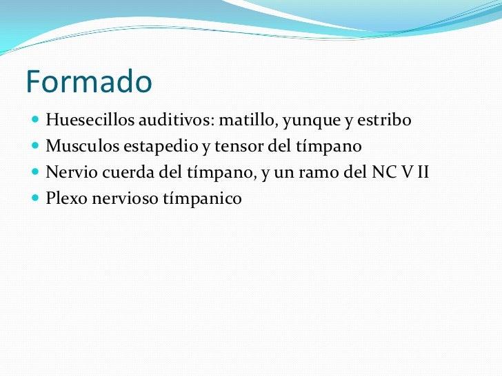Formado<br />Huesecillos auditivos: matillo, yunque y estribo<br />Musculosestapedio y tensor del tímpano <br />Nervio cue...