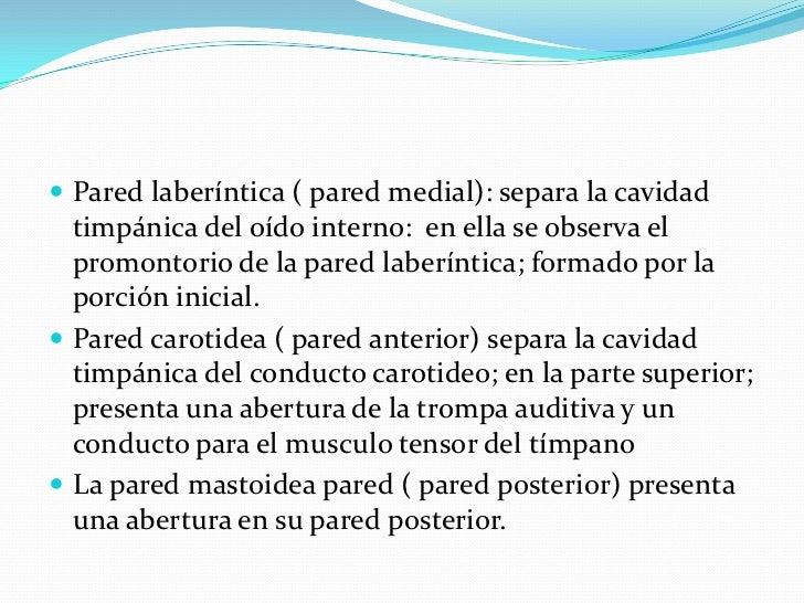 Pared laberíntica ( pared medial): separa la cavidad timpánica del oído interno:  en ella se observa el promontorio de la ...
