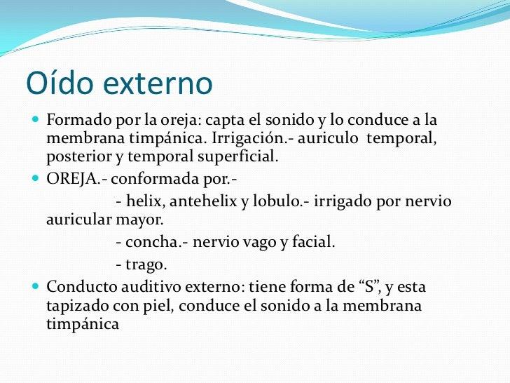 Oído externo<br />Formado por la oreja: capta el sonido y lo conduce a la membrana timpánica. Irrigación.- auriculo  tempo...