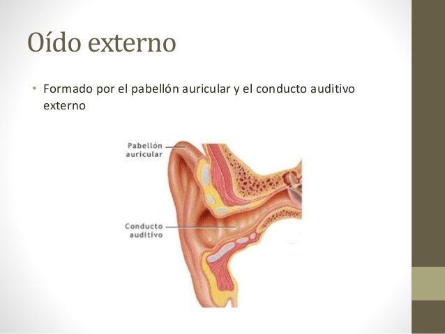 Anatomia y Fisiologia de aparato auditivo