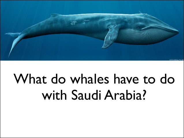 What do whales have to do with Saudi Arabia?
