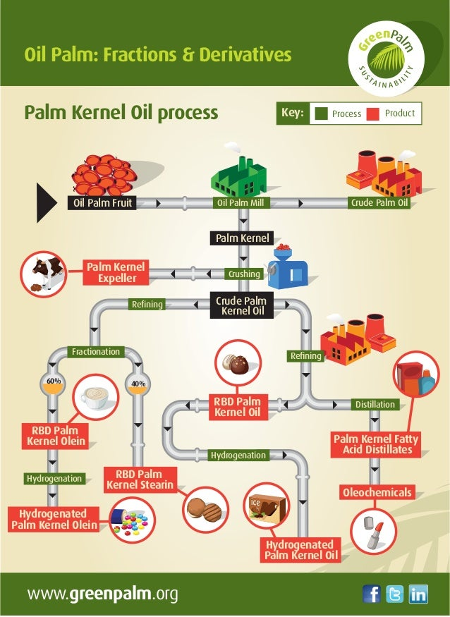 Palm Fruit ( Kernel) Oil Processing Machine/Palm Oil Extraction Machine