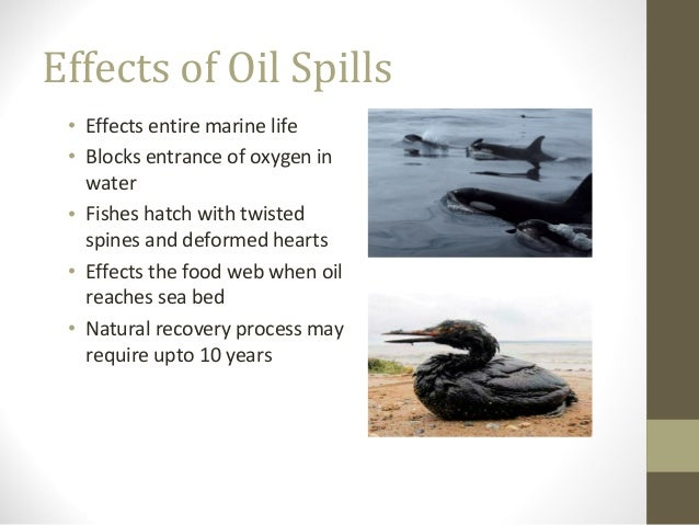 cause and effect of bp oil spill After the spill researchers study the lingering effects of the bp oil spill by kirsten weir july/august 2014, vol 45, no 7.