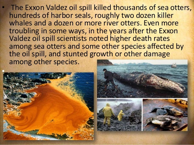 An introduction to the exxon valdez incident