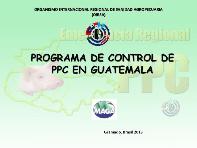 ORGANISMO INTERNACIONAL REGIONAL DE SANIDAD AGROPECUARIA (OIRSA) Gramado, Brasil 2013 PROGRAMA DE CONTROL DE PPC EN GUATEM...
