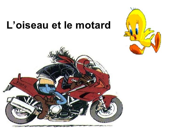 L'oiseau et le motard