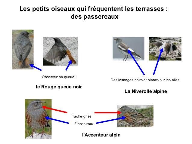Oiseaux Slide 3