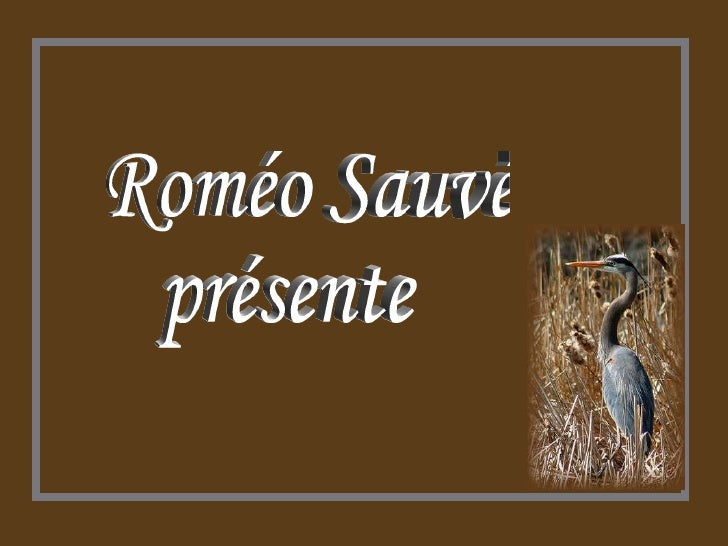 Roméo Sauvé présente