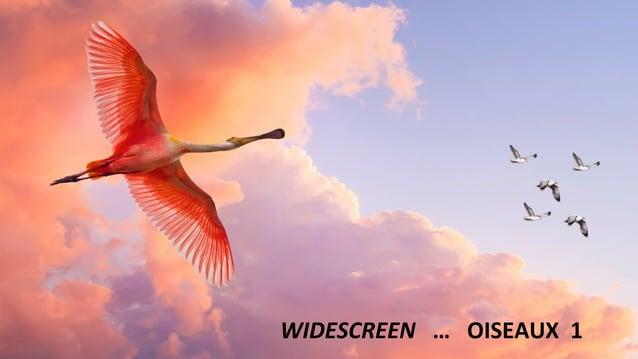 WIDESCREEN … OISEAUX 1