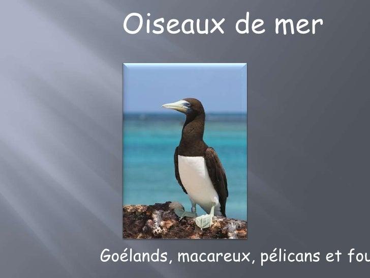 Oiseaux de merGoélands, macareux, pélicans et fou
