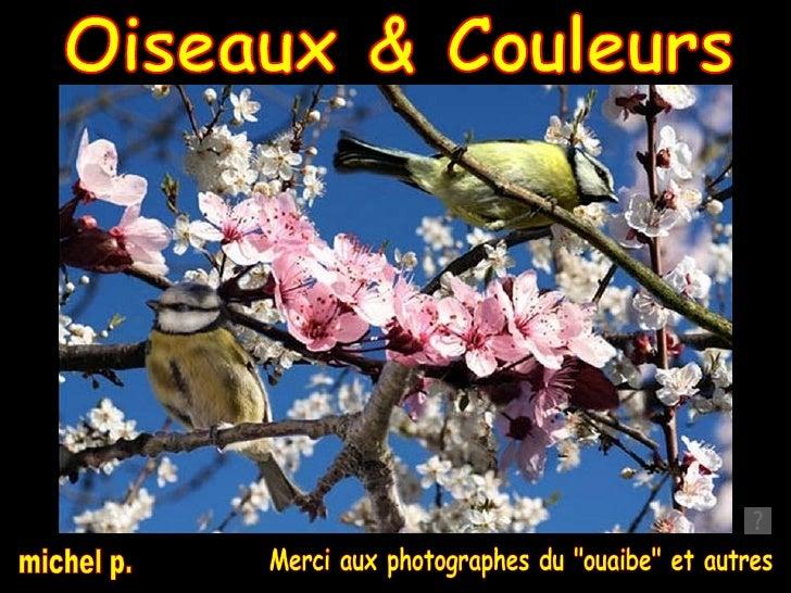 """Oiseaux & Couleurs Merci aux photographes du """"ouaibe"""" et autres michel p."""